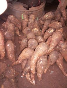 What you didn't know about Cocoyam (Taro) - Health Tips