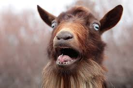 goat Okyeame Kwame is a 'goat' – Presenter - Okyeame Kwame is a 'goat' – Presenter